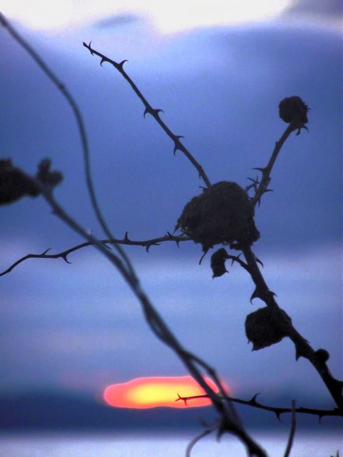 hornby_winter_rose