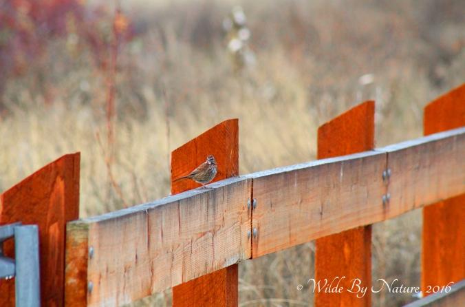 sosp-fence