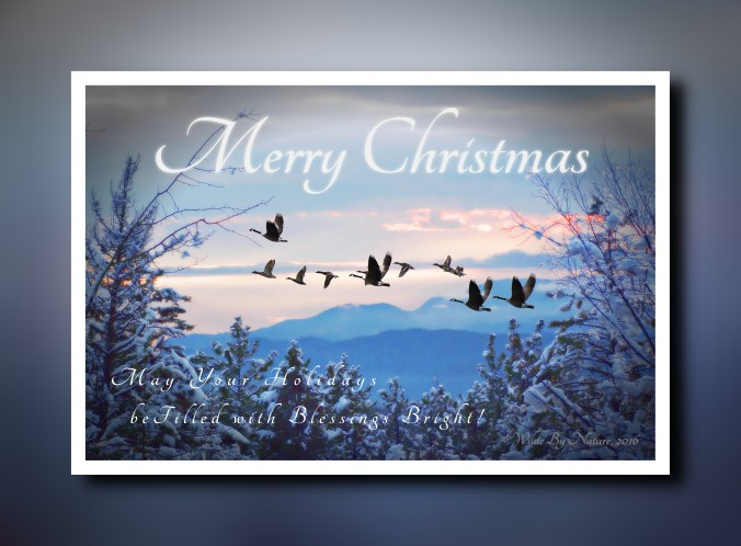 blue-xmas-card-vignette-template